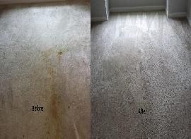 Professional Carpet Clean..