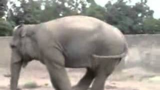 compilation of funny animal videos