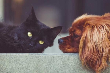 U.S. House of Representatives Ban Slaughter of Dogs, Cats