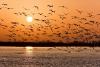India witnesses Alarming Decline in the Bird Habitat