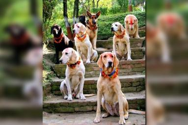 Dogs Get Royal Treatment During Festival Of Lights},{Dogs Get Royal Treatment During Festival Of Lights