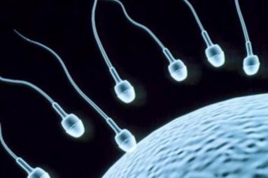 8 Super Foods To Improve Sperm Count