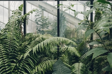 Growing plants- good for you and your home