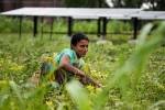 Villagers in Punjab Relying More on NRIs for Development Than on Politicians
