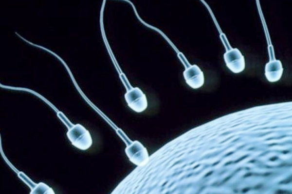 8 Super Foods To Improve Sperm Count